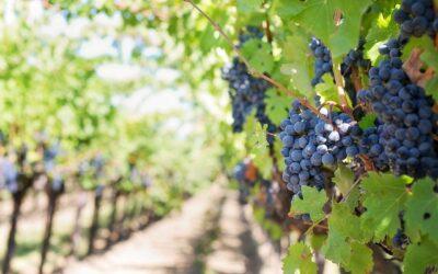 Propriétés viticoles GC LURTON ESTATES: ce qu'il faut savoir!